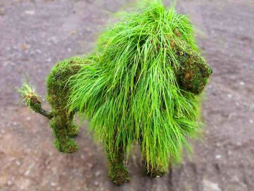 Топиар – «парикмахерская» для растений