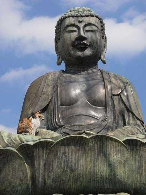 Коты и Будды